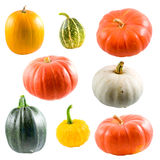 Collection of colorful pumpkins royalty free stock photo