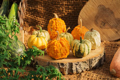 Collection of colorful pumpkins Stock Images