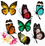 Collection of colorful realistic  butterflies Royalty Free Stock Image