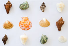 Collection of colorful sea shells Royalty Free Stock Photo
