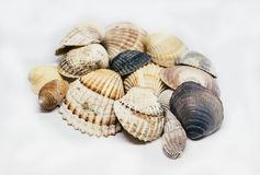Collection Of Colorful Sea Shells Fosils. On white background Stock Image
