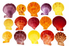 Collection colorful sea shells of mollusk isolated on white background Stock Photography