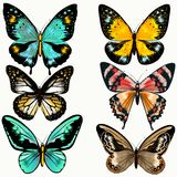 Collection of colorful vector butterflies for design Royalty Free Stock Photo