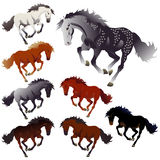 Collection colors of horses Stock Image