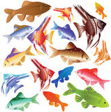 Collection of colour aquarian fishes. Stock Image