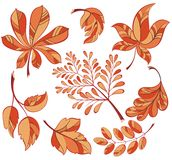 Collection of  colourful autumn leaves Royalty Free Stock Images