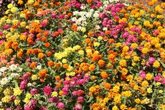 Collection of colourful flowers royalty free stock photo