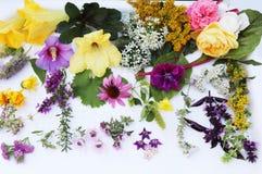 Collection comestible de fleurs d'isolement sur le fond blanc Vue supérieure Photographie stock libre de droits