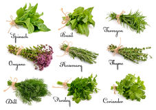 Collection of cooking herbs and spices. Stock Images