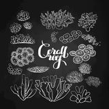 Collection of  coral reef  elements Stock Photos
