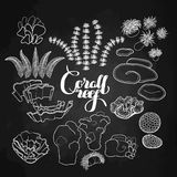 Collection of  coral reef  elements Royalty Free Stock Photos