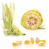 Collection of corn Royalty Free Stock Photo