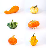 Collection of cucurbit. One collection of six different colorful and strange cucurbits royalty free stock photos