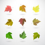 Collection of currant leaves Royalty Free Stock Photography