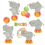 Collection of cute circus elephant Royalty Free Stock Images