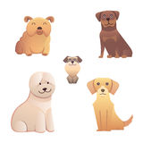Collection cute different type of dogs small and big. Vector breed  isolated set. Cartoon illustrations  a happy doggy Royalty Free Stock Images