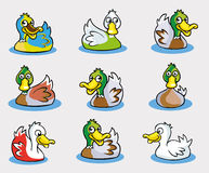 Collection of Cute Duck Cartoon Vector Royalty Free Stock Photo