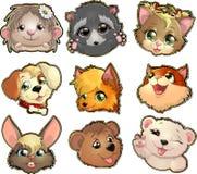 Collection of cute face animal Stock Photos