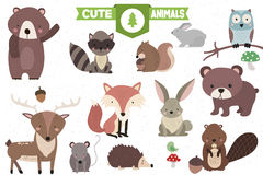 Collection of Cute Forest Animals Stock Illustration