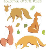 Collection of cute foxes for design Stock Images