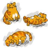 Collection of cute red cat vector set Stock Photos
