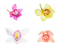 Collection of cymbidium flower orchid close up isolated on white Royalty Free Stock Images