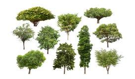 Collection d'arbre d'isolement sur le fond blanc Photo libre de droits