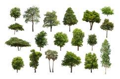 Collection d'arbre d'isolement sur le fond blanc Photographie stock