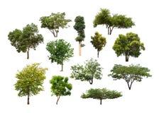 Collection d'arbre d'isolement sur le fond blanc Image libre de droits