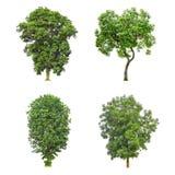 Collection d'arbre d'isolement sur le fond blanc photos stock
