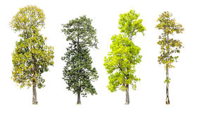 Collection d'arbres d'isolement image stock