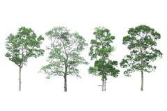 Collection d'arbres sur le fond blanc Images libres de droits