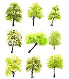Collection d'arbres verts sur le fond blanc Image stock