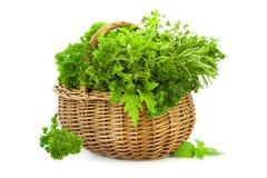 Collection d'herbes épicées fraîches dans le panier/d'isolement Photo libre de droits