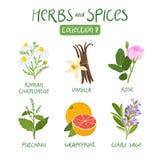 Collection 7 d'herbes et d'épices illustration libre de droits
