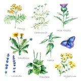 Collection d'herbes et de plantes médicales tirées par la main illustration de vecteur