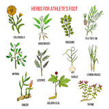 Collection d'herbes le pied d'athlète Illustration Stock