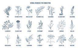 Collection d'herbes naturelles pour la congestion illustration libre de droits