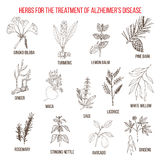 Collection d'herbes pour la maladie d'Alzheimer Photographie stock libre de droits