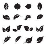 Collection d'icônes de feuille Icônes noires d'isolement sur un fond blanc Illustration de Vecteur