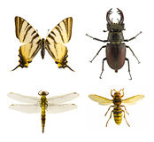 Collection d'insecte Images stock