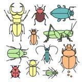 Collection d'insectes Image libre de droits