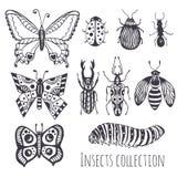 Collection d'insectes de main, ensemble mignon de décoration pour la conception, icônes, logo ou copie Illustration de vecteur Images libres de droits
