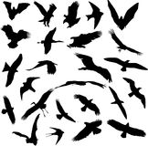 Collection d'isolement d'oiseaux Illustration Libre de Droits