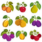 Collection of 3d simple fruits vector icons with green leaves, h. Arvest season symbols. Apricots, plums, pears, apples and cherries isolated design elements Royalty Free Stock Photography