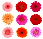 Collection daisy flowers Stock Image
