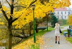 Collection de beau vert coloré d'Autumn Leaves, jaune, orange, rouge Image libre de droits