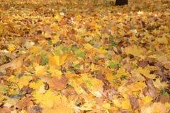 Collection de beau vert coloré d'Autumn Leaves, jaune, orange, rouge Photo libre de droits
