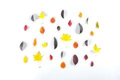 Collection de belles feuilles d'automne colorées d'isolement sur le fond blanc Photo stock