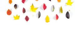 Collection de belles feuilles d'automne colorées d'isolement sur le fond blanc Photo libre de droits